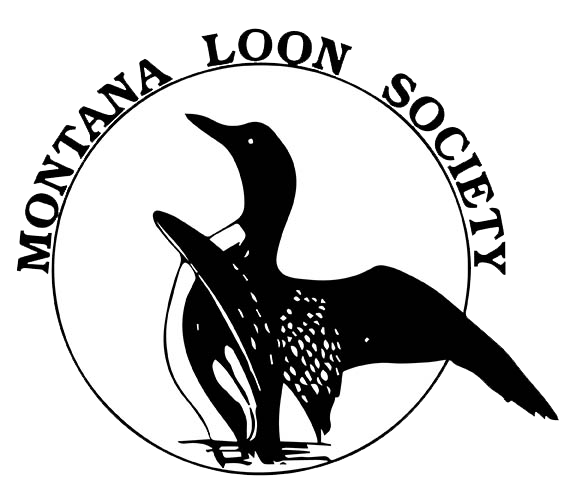 Montana Loons